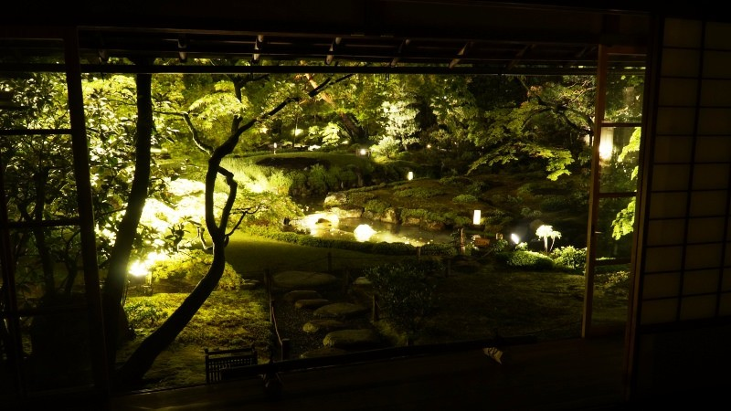 garden is illuminated