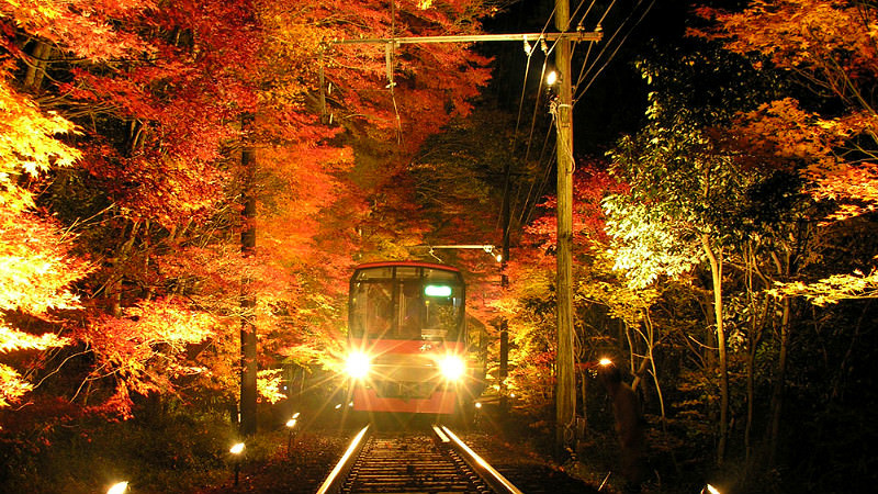 Momiji Leaf Tunnel Illumination