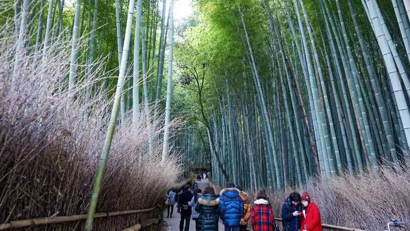 The Bamboo Grove is always crowded