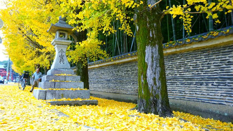 大門前地上覆滿著銀杏的落葉!