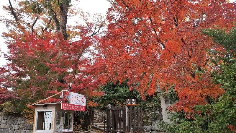 Kitano Tenmangu Shrine 3