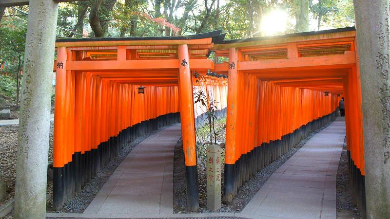 """Senbon Torii """"Thousands of torii gates"""""""