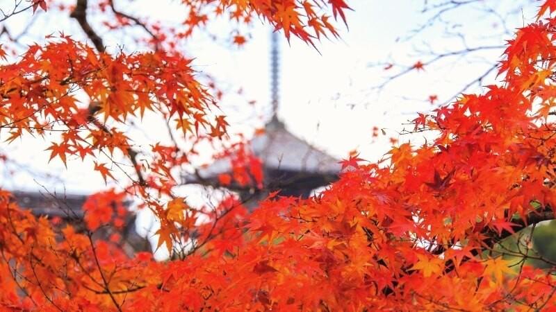 12點從嵐山出發到仁和寺觀光