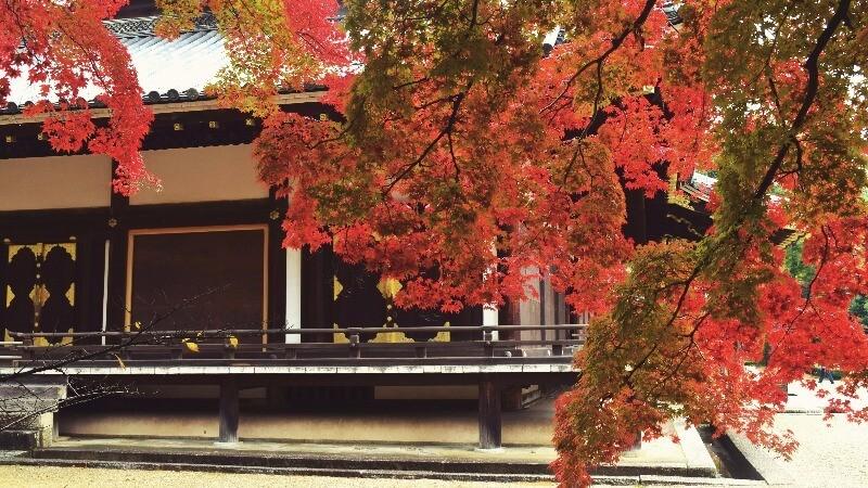 幾乎被紅葉包圍住的建築