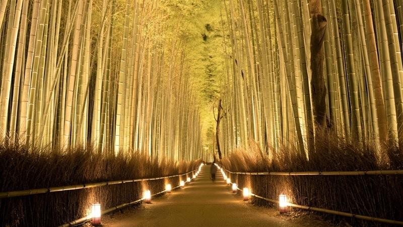 嵐山 花燈路