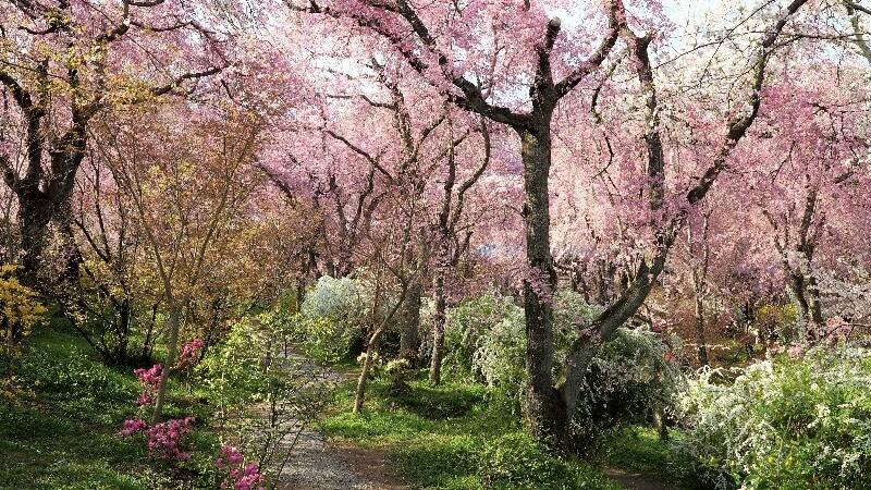 Haradanien Garden
