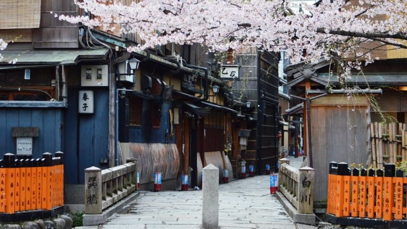 Shirakawa-dori is also famous as a place to see cherry blossoms