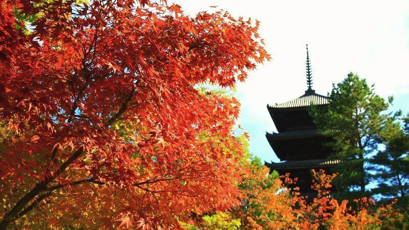 see the Five-Storied Pagoda of Ninna-ji