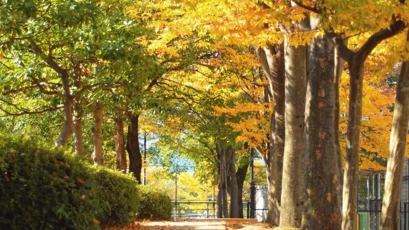 秋天楓葉的美景