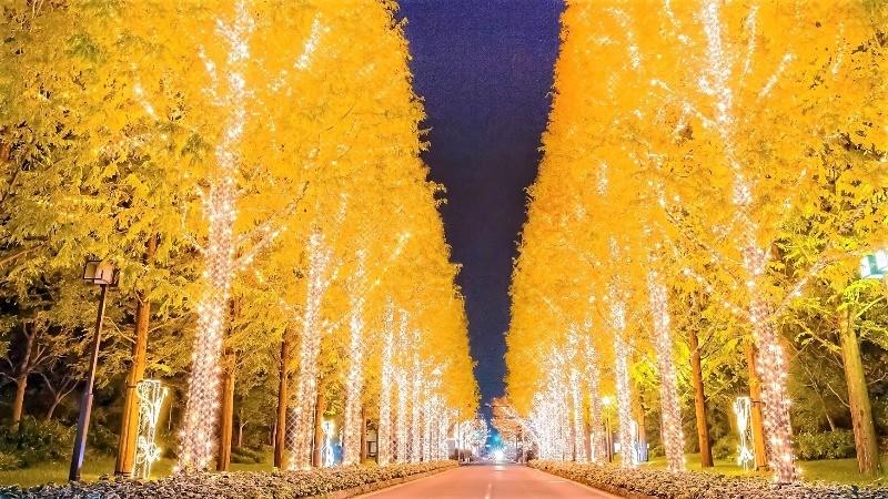 使用LED和燈泡掛滿周圍的一排行樹上