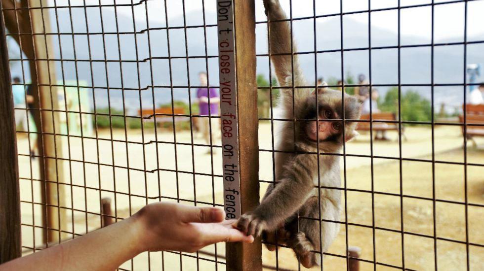 岩田山猴子公園
