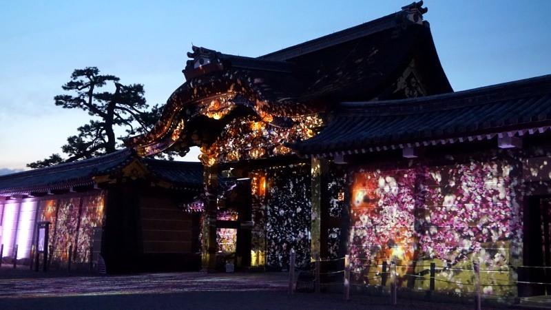 二条城櫻花祭