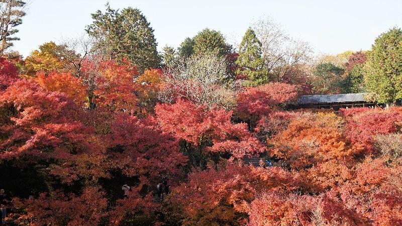 Tofuku-ji Temple 2